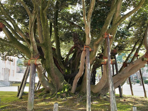 20160107_tree01
