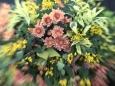 20201018_flowers000